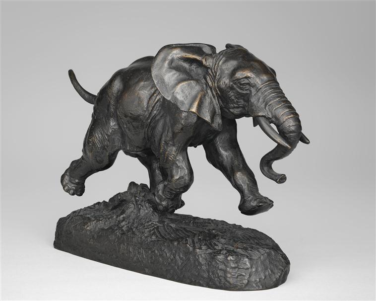Eléphant du Sénégal chargeant dit aussi Jeune éléphant d'Afrique ou du Sénégal