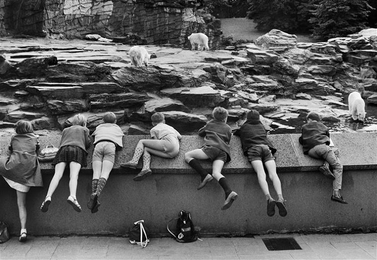 Zoo de Berlin Est, Willy Ronis