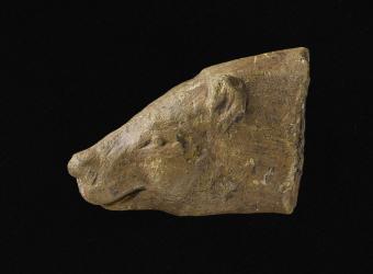 Tête d'ours, musée d'Archéologie nationale et Domaine national de Saint-Germain-en-Laye