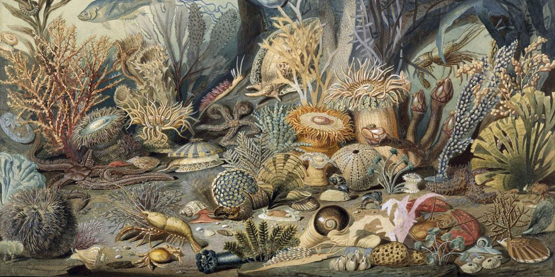 Ocean life, Christian Schussele and James M. Sommerville, United States, New-York (NY), The Metropolitan Museum of Art