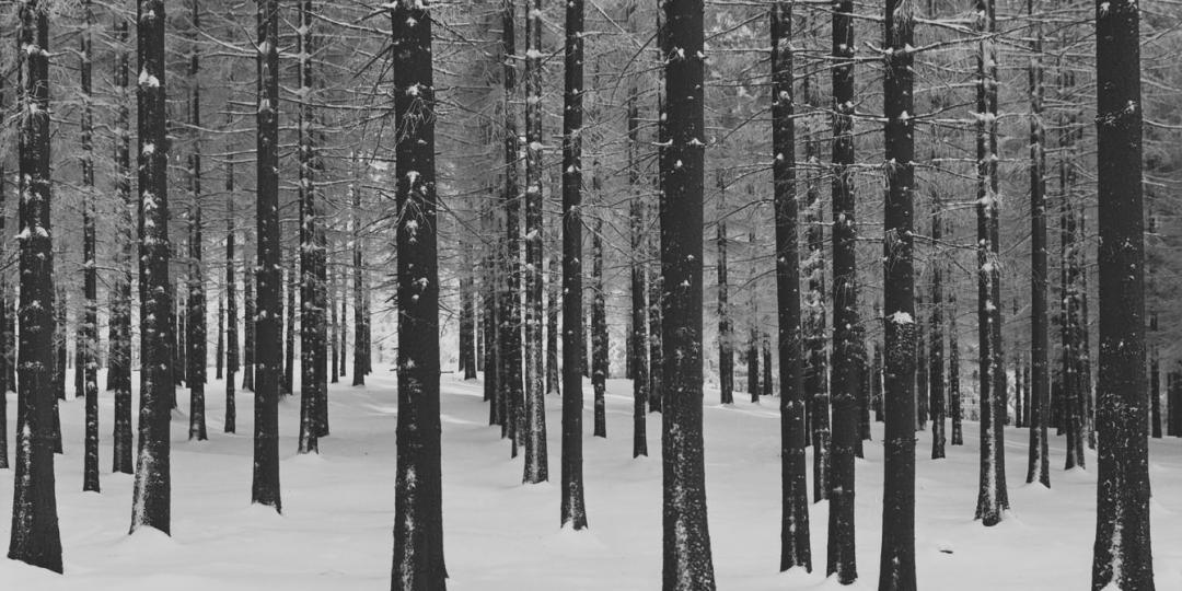 Fichten im Winter, Albert Renger-Patzsch, Paris, Centre Pompidou - Musée national d'art moderne - Centre de création industrielle
