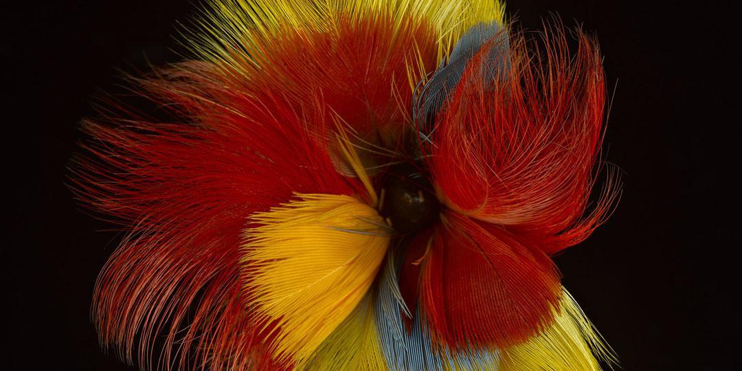 Plumes, Marseille, musée d'Arts africains, océaniens, amérindiens