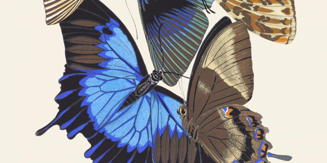 Papillons, Emile-Allain Séguy, Royaume-Uni, Londres, Victoria and Albert Museum